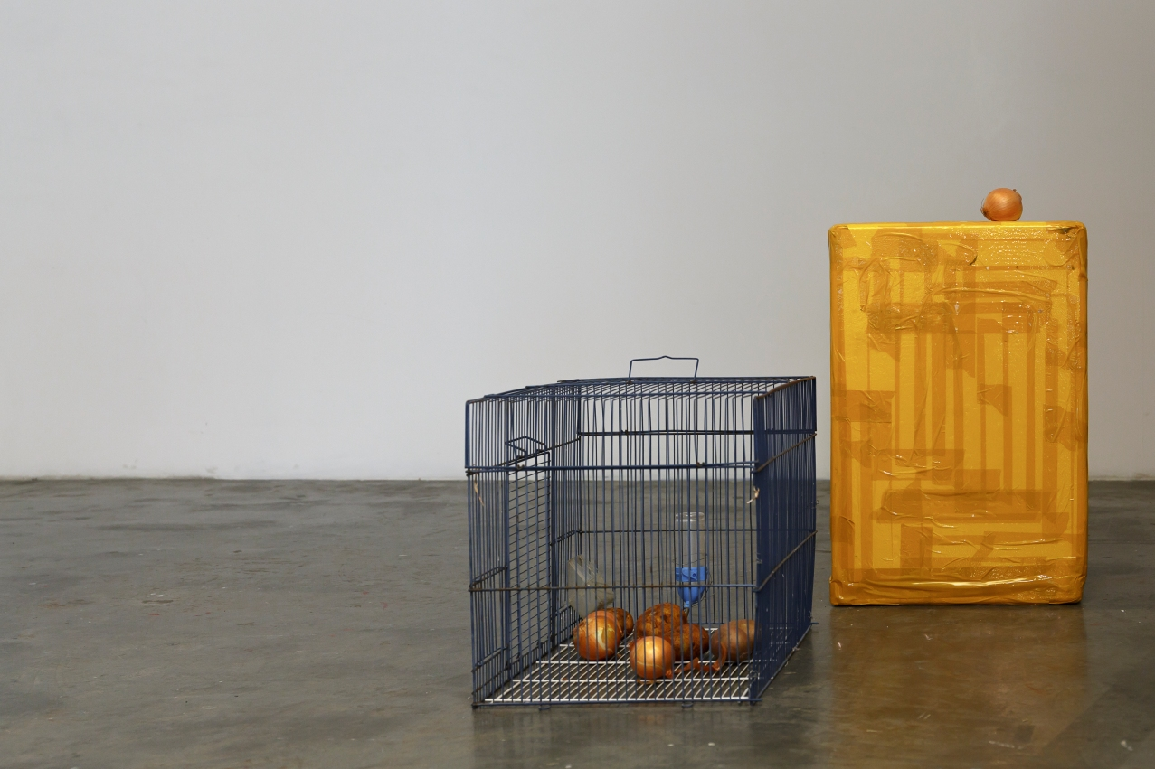 Turtle Dove // Dominic Sargent, Untitled 2017, Cages, packing tape, styrofoam, cardboard, potatoes, onions, orange, birdfeed, hamster wheel, water dispenser, mirror, and plastic toys, Dimensions variable. Image by Document Photography.
